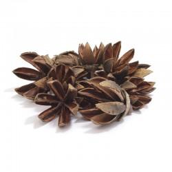 Tantora Black Star - 15szt. naturalna kryjówka, garbniki